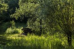 Am alten Steinbruch (Gerosas) Tags: altersteinbruchremseck baum gegenlicht grn juli makroplanart2100 natur pflanzen sommer steinbruch steine unteresremstal weiher zeiss monochrome unifarben sonnenschein sunshine green