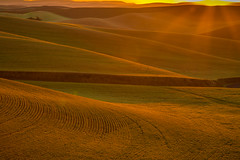 Prune Orchard Sunrise (Dex Horton Photography) Tags: sunrise pruneorchardroad palouse golden bestof colfax washington