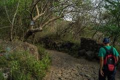 DSC03158 (Braulio Gmez) Tags: barrancadehuentitn biodiversidad caminoamascuala canyon canyonhuentitan faunayflora floresyplantas guadalajara guardianesdelabarranca huentitn ixtlahuacandelro jalisco mountainrange mxico naturaleza paisaje senderismo sierra barrancadehuentitn barranca huentitn ixtlahuacandelro mxico