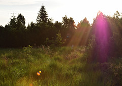 First sunbeams - Erste Sonnenstrahlen (Lala89_Photos) Tags: sunrise sonnenaufgang blackforest black forest schwarzwald sonne sun sunlight sonnenlicht sunbeam sonnenstrahl meadow wiese trees bume