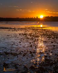 Sun Sparkles (Tim Harding) Tags: canada landscape ontario seasons simcoecounty summer sunrise tinymarsh