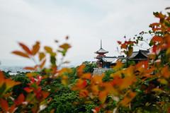 Kiyomizu-Dera Buddhist Temple, Kyoto, Japan (PhilMeintzer) Tags: yellow japan kyoto kiyomizu kiyomizudera dera temple bokeh travel pagoda fujifilm fuji x100s x100    asia backpacking