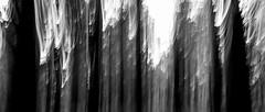 The forest (joseba71) Tags: abtracto abstract bosque forest blanco neg black white bw contraste contrast trepidar vibrate nonocromatico abstracto y negro