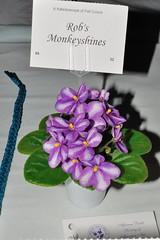 Rob's Monkeyshines (MJI Photos (Mary J. I.)) Tags: dsc4030 robsmonkeyshines avsminnesota avsm africanviolet africanvioletsociety flowers statefair mn minnesota minnesotastatefair2016 flowershow blooming houseplants show plants plantshow twincitiesgesneriads gesneriads saintpaulia gesneriad statefairfriday