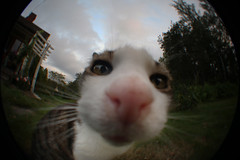 Inspecting the fish-eye (Alienated Romantic) Tags: fisheye cat nose m42 supermulticoated takumar 5518 with kenko 016x