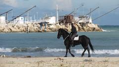 IMG_9706.JPG (gianpierocornice) Tags: hourse giulianova italy sea adriatico abruzzo mareadriatico