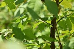 Strange bark (petrOlly) Tags: europe europa poland polska polen lodz nature natura przyroda garden inthegarden summer tree trees plants plant