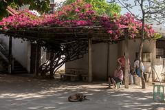 DSC_0608a (jiangliu24680) Tags: myanmar goldtriangle