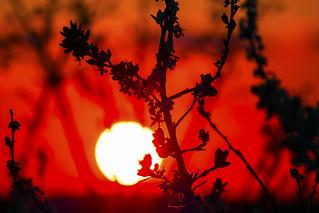 Sunned plants