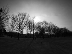 Paris Late Afternoon (udontknowmyname75) Tags: park light shadow bw paris france tree de blackwhite europe afternoon late tuileries parc iphone5s