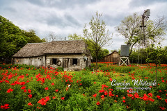 Castroville Poppy House