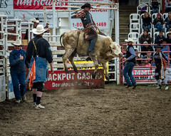 """Who said, """"White Bulls Can't Jump?"""" (D.Spence Photography) Tags: ranch canada pentax alberta pro rodeo innisfail daines davespence"""