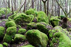 20160712-03-Mossy boulders in Wellington Park (Roger T Wong) Tags: 2016 austraia cathedralrock rogertwong sel2470z sony2470 sonya7ii sonyalpha7ii sonyfe2470mmf4zaosscarlzeissvariotessart sonyilce7m2 tasmania wellingtonpark bushwalk green hike moss outdoors rocks tramp trek walk