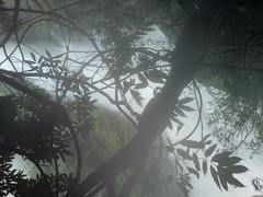 DSC03542 (Gokul Chakrapani) Tags: waterfalls karnataka westernghats bolle charmadi