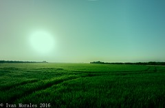 Senderos. #tbt #afternoon #sunny #summer #tracking #tracks #rice #fields #albufera #valencia #samyang #8mm #green #life (Ivalethia) Tags: tracking afternoon rice valencia tbt green 8mm life tracks summer fields sunny albufera samyang