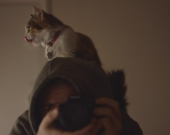 Runi (siinestesiia) Tags: nikon nikond5200 nikkor 50mm 50mmlens photografa photographie photography portrait cat kitty kitten gatita gata