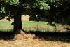 Foin — Bassaud, Creuse, juillet 2016 (Stéphane Bily) Tags: stéphanebily creuse marronnier foin campagne