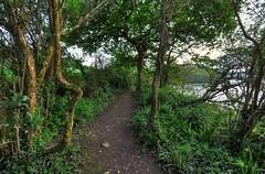 Woodland path near Wacker Quay, Cornwall (Baz Richardson (trying to catch up!)) Tags: woods cornwall paths woodlandpaths riverlynher wackerquay