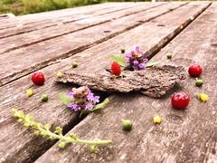Renaissance d'une écorce (Ibrahim422) Tags: nature fleur jaune mort vert renaissance forêt bois vie gastronomie écorce baies émotion