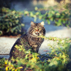 Street cat 156 (Yalitas) Tags: pet cats cat canon kat feline chat kitty gato felino katze katzen kot kedi kass gatta streetcat kotka  kocka  katte  katzchen kottur