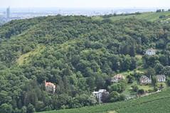sDSC_0080 (L.Karnas) Tags: wien vienna wiede    viena vienne sommer summer 2016 leopoldsberg aussichtspunkt nasenweg panorama