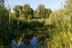 2009-07-26_DSC0235_DSLR-A700 (naturfreundenw-schweiz) Tags: gewasser morgenstunde nwschweiz waldflur