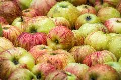 Abundance (writing with light 2422 [NOT PRO]) Tags: abundance richborder apples thebackyard washingtonstate darlingtonia applesauce sonya77