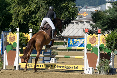 DSC08950_s (AndiP66) Tags: springen pferdesporttage dagmersellen luzern 2016 juli july 19juli2016 pferd horse schweiz switzerland kantonluzern cantonoflucerne concours wettbewerb horsejumping springreiten pferdespringen equestrian sports pferdesport sport martinameyer grueb wolhusen sony sonyalpha 77markii 77ii 77m2 a77ii alpha ilca77m2 slta77ii sony70400mm f456 sony70400mmf456gssmii sal70400g2 andreaspeters ch