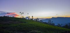 Sunset over Knuckles (ajanth.v) Tags: sunset knuckles mountain range srilanka outdoor green plants tea tree landscape nikon d7100 18140mm