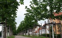 18-IMG_2941 (hemingwayfoto) Tags: allee alleenmonatsthema baum bayern hindenburgwall kastanie neuanpflanzung neustadt neustadtdonau
