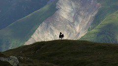 silhouette (Alex Jacek) Tags: horse nature silhouette shade shadow schatten pferde pferd panorama panoramic