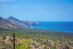 El Saltito, La Paz, Mxico (Carlos Federico CR) Tags: la paz el saltito mxico beach playa sea mar desert desierto cactus montaa mountain