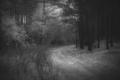 *** (pszcz9) Tags: polska poland przyroda nature parknarodowy nationalpark droga road las forest pejza landscape beautifulearth sony a77 bw blackandwhite monochrome