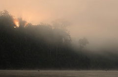 Peru (richard.mcmanus.) Tags: peru latinamerica rainforest manu trees river mist dawn mcmanus landscape gettyimages