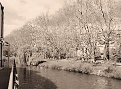 Platanenallee im 1920 -er Fotografie Stil (eagle1effi) Tags: germany deutschland pano panoramic tuebingen tbingen tubingen wrttemberg platanen panoramablick platanenallee eagle1effi dibenga samsunggalaxys5