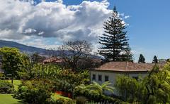 Hotel Quinta da Casa Branca Gardens (Peter J Dean) Tags: family sky holiday portugal gardens hotel april pt madeira funchal 2015 quintadacasabranca canonef1635mmf28liiusm canoneos5dmarkiii