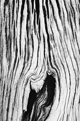 (APLJ) Tags: bw 50mm pentax driftwood vashonisland k01 andrewjohns