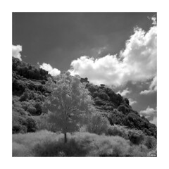 Rolleiflex_IR400_001 (dcanalogue) Tags: camera red white black tree classic tlr film rollei rolleiflex zeiss vintage landscape ir countryside kodak country ishootfilm filter 400 infrared medium format nm 88 infra find isf f35 75mm r72 35f 720 wlf adox adonal filmisnotdead 88a a wratten ir400 filmforever analogicait