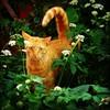 "Cats of West Philly #6. ""Orange Julius"". #cat #gingercat #orangecat #catsofwestphilly #feline #fluffy #tigercat #tiger #ginger #purrfect #urbancat #naturecat #nature #gato #chat #housecat #westphilly #philadelphia #agonyhouse (artofmarabelle) Tags: cameraphone philadelphia nature cat square ginger orangecat feline chat tiger fluffy gato squareformat housecat hefe icat purrfect westphilly gingercat orangejulius tigercat urbancat naturecat iphoneography instagramapp uploaded:by=instagram catsofwestphilly agonyhouse"
