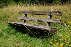 Happy Bench Monday! (rainbowcave) Tags: summer nature forest bench meadow wiese bank sunny sonnig idyllic hbm waldrand happybenchmonday
