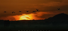 Misty Morning (wajahat malik) Tags: travel light detail silhouette photography golden photoshoot bokeh outdoor naturallight hour wilderness 400mm colourfull canonguy coloursofnature nationgeographic birdsofpakistan wwfpakistan fornaturelovers beautyofpakistan wajahatmalik