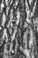 Ponderosa Pine Bark BW (Don Thoreby) Tags: forest canyon cascades washingtonstate slopes cascademountains cascaderange aspentrees ponderosapine cleelumriver suncadiaresort cleelumrivervalley