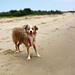 Laika Summer Fun in Sandy Hook Beach, NJ