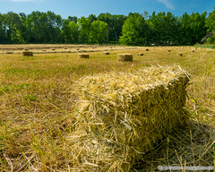 Yankee Farmlands  71 (J. G. Coleman Photography) Tags: summer usa field rural forest countryside us woods woodlands farm connecticut country farming newengland farmland summertime hay agriculture hayfield bales pastoral bucolic haybales bloomfield nutmegstate squarebales southernnewengland