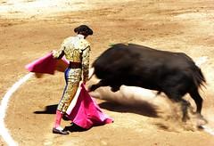 capeando (aficion2012) Tags: ceret 2016 novillada corrida toros bulls bull fight novillos france francia d mario y hros de manuel vinhas abel robles torero matador novillero