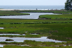2016-07-17 Rachael Carson NWR (11) (Paul-W) Tags: vacation birds river march marine walk maine wells hike estuary trail saltmarsh saltpan 2016 rachelcarsonnationalwildliferefuge
