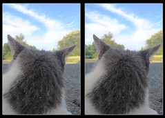 Yeah, I Know You're There - Parallel 3D (DarkOnus) Tags: cyber cat feline pennsylvania buckscounty huawei mate8 cell phone 3d stereogram stereography stereo darkonus closeup animal mammal crossview crosseye