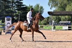 DSC_0827 (2) (ploufjf_64) Tags: paus show jumping chevaux pau 2016