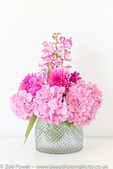 Summery pinks from my garden (Zo Power) Tags: floraldisplay flowers hydrangea mygarden pastel penstemon pink pretty stilllife summer vase whitebackground