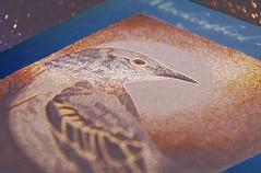 Iridescent Mockingbird (Caroline.32) Tags: bird macro macromondays cards iridescent mockingbird nikond3200 18140mmlens extensiontubes20mm